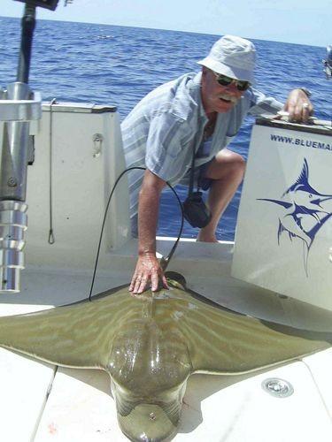 26/09 duckbill ray Cavalier & Blue Marlin Sport Fishing Gran Canaria