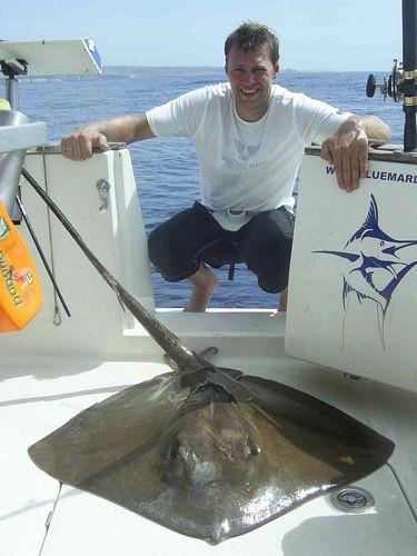 03/10 common stingray Cavalier & Blue Marlin Sport Fishing Gran Canaria
