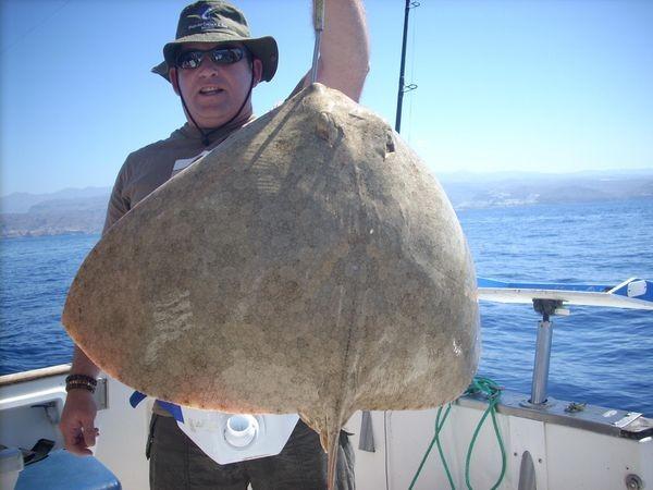butterfly ray Cavalier & Blue Marlin Sport Fishing Gran Canaria