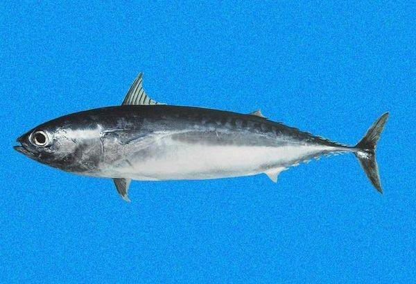 Tunabullet Cavalier & Blue Marlin Sport Fishing Gran Canaria