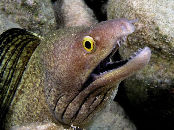 Moraypurple mouth Cavalier & Blue Marlin Sport Fishing Gran Canaria
