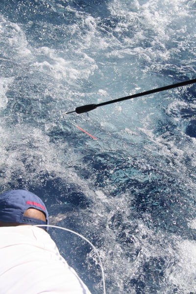 Release Me Cavalier & Blue Marlin Sport Fishing Gran Canaria