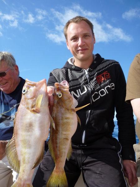 Comber fish Cavalier & Blue Marlin Sport Fishing Gran Canaria