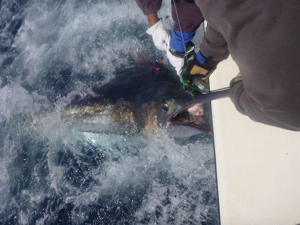 April Photo Archve 2013 Cavalier & Blue Marlin Sport Fishing Gran Canaria