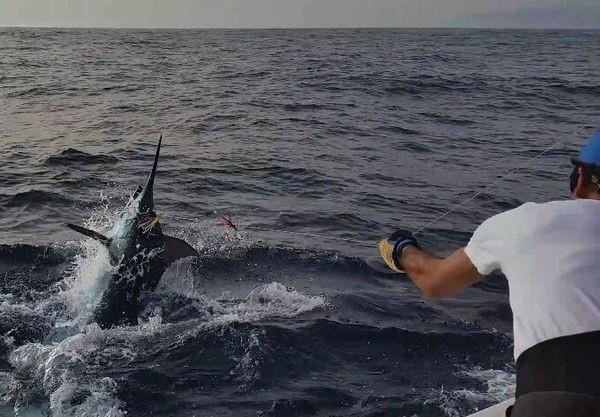 Blue Marlin capturado por Lena desde Suecia Pesca Deportiva Cavalier & Blue Marlin Gran Canaria