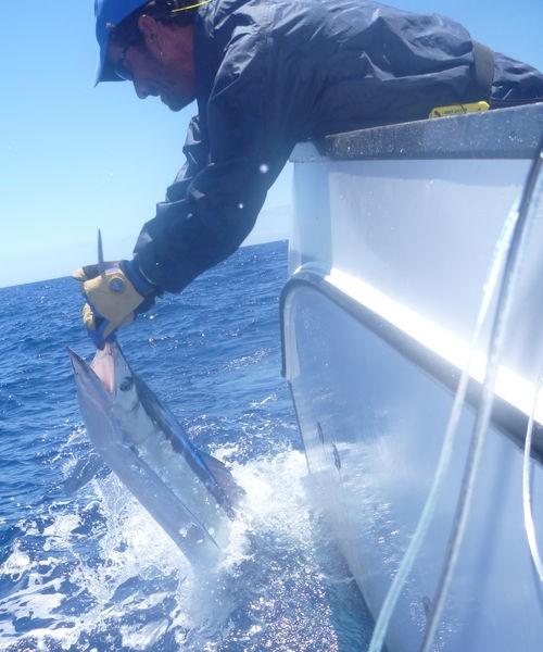 Spearfish Pesca Deportiva Cavalier & Blue Marlin Gran Canaria