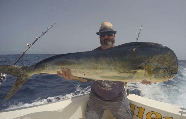 Goudmakreel - Dorado Cavalier & Blue Marlin Sport Fishing Gran Canaria