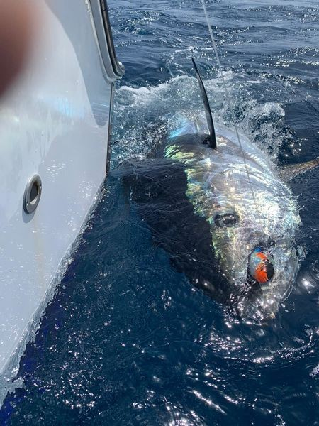 March Photo Archive 2020 Cavalier & Blue Marlin Sport Fishing Gran Canaria
