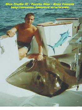 brown stingray Cavalier & Blue Marlin Sport Fishing Gran Canaria