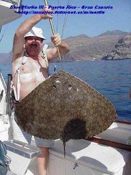 fjärilsstråle Cavalier & Blue Marlin Sport Fishing Gran Canaria