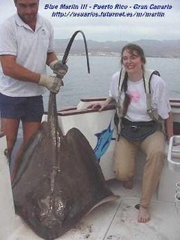common stingray Cavalier & Blue Marlin Sport Fishing Gran Canaria