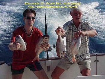 seabream Cavalier & Blue Marlin Sport Fishing Gran Canaria