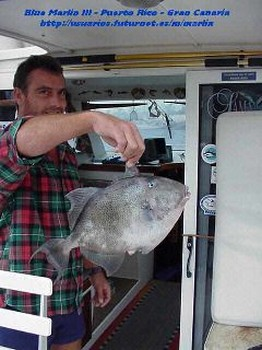triggerfish Cavalier & Blue Marlin Sport Fishing Gran Canaria