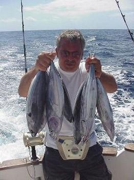 skipjack tuna Cavalier & Blue Marlin Sport Fishing Gran Canaria