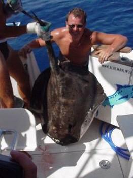 roughtail stingray Cavalier & Blue Marlin Pesca sportiva Gran Canaria