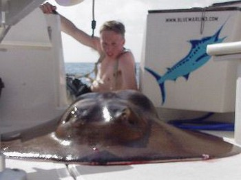 round stingray Cavalier & Blue Marlin Sport Fishing Gran Canaria