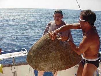 rayo de mariposa Pesca Deportiva Cavalier & Blue Marlin Gran Canaria