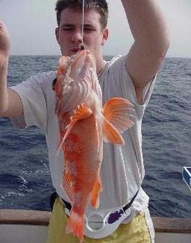 wreckfish Cavalier & Blue Marlin Sport Fishing Gran Canaria
