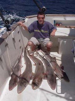 tope Cavalier & Blue Marlin Sport Fishing Gran Canaria