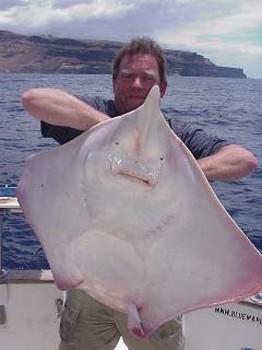 thornback ray Cavalier & Blue Marlin Sport Fishing Gran Canaria