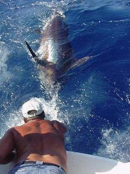aguja azul Pesca Deportiva Cavalier & Blue Marlin Gran Canaria