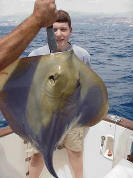 blue stingray Cavalier & Blue Marlin Sport Fishing Gran Canaria