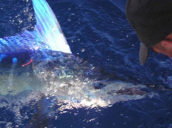 white marlin Cavalier & Blue Marlin Sport Fishing Gran Canaria