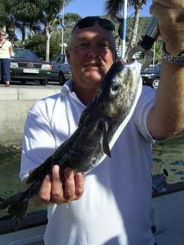pufferfish Cavalier & Blue Marlin Sport Fishing Gran Canaria