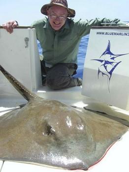 mantarraya común Pesca Deportiva Cavalier & Blue Marlin Gran Canaria