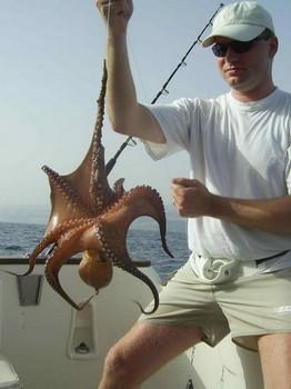 octopus Cavalier & Blue Marlin Sport Fishing Gran Canaria