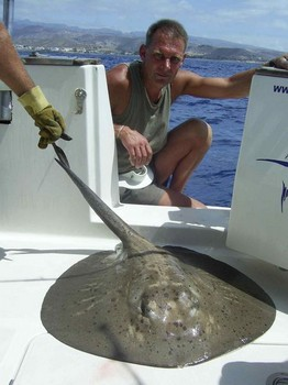 round stingray Cavalier & Blue Marlin Sport Fishing Gran Canaria