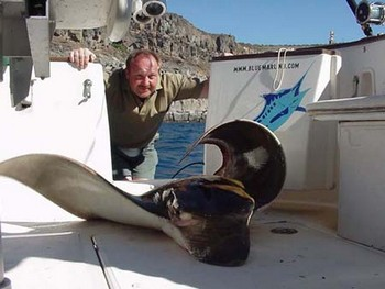 19/01 duckbill ray Cavalier & Blue Marlin Sport Fishing Gran Canaria