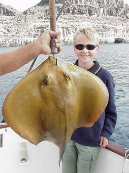 21/01 common stingray Cavalier & Blue Marlin Sport Fishing Gran Canaria
