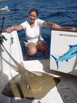 08/02 common stingray Cavalier & Blue Marlin Sport Fishing Gran Canaria