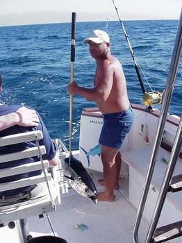 05/03 albacore tuna Cavalier & Blue Marlin Sport Fishing Gran Canaria