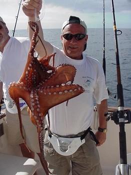 16/04 octopus Cavalier & Blue Marlin Sport Fishing Gran Canaria
