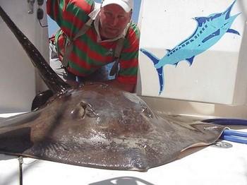 27/04 common stingray Cavalier & Blue Marlin Sport Fishing Gran Canaria