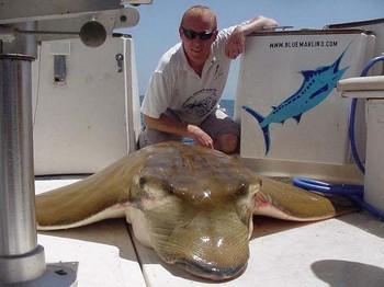 24/05 duckbill ray Cavalier & Blue Marlin Sport Fishing Gran Canaria