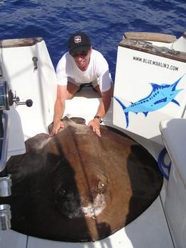 07/10 round stingray Cavalier & Blue Marlin Sport Fishing Gran Canaria