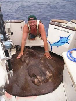 10/10 round stingray Cavalier & Blue Marlin Sport Fishing Gran Canaria
