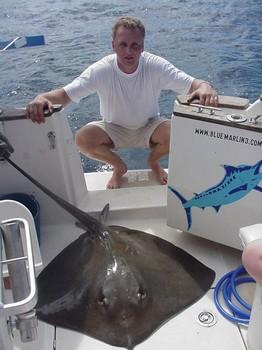 23/10 common stingray Cavalier & Blue Marlin Sport Fishing Gran Canaria