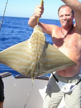04/11 duckbill ray Cavalier & Blue Marlin Sport Fishing Gran Canaria