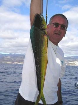 27/11 dorado Cavalier & Blue Marlin Sport Fishing Gran Canaria