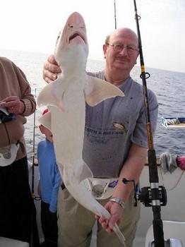 08/01 smoothhound Cavalier & Blue Marlin Sport Fishing Gran Canaria