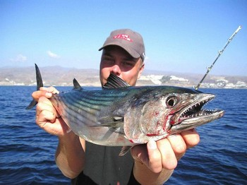 11/01 north  atlantic bonito Cavalier & Blue Marlin Sport Fishing Gran Canaria