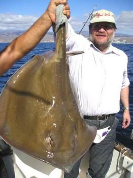 25/01 common stingray Cavalier & Blue Marlin Sport Fishing Gran Canaria