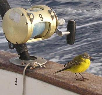 05/03 welcome Cavalier & Blue Marlin Sport Fishing Gran Canaria