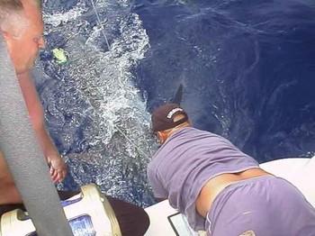 23/05 blue marlin Cavalier & Blue Marlin Sport Fishing Gran Canaria