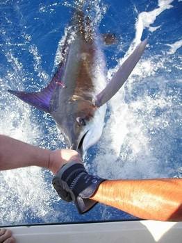 27/05 blue marlin Cavalier & Blue Marlin Sport Fishing Gran Canaria