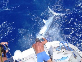 06/07 blue marlin Cavalier & Blue Marlin Sport Fishing Gran Canaria